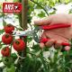 Sekator do owoców i kwiatów (czerwony) ARS 300L